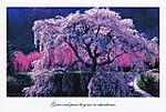 161014poscro_send0909_jp8742451
